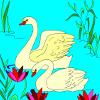 colora��o cisnes