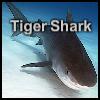 puzzle de requin tigre