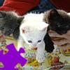 Trois b�b�s chats