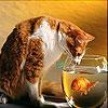 Le poisson et le chat