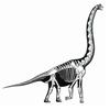 Un Squelette de Dinosaure