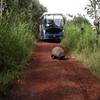 Les tortues et le Bus
